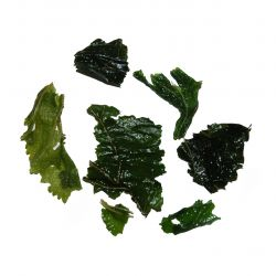 Mulberry Leaf Tisane - wet leaf
